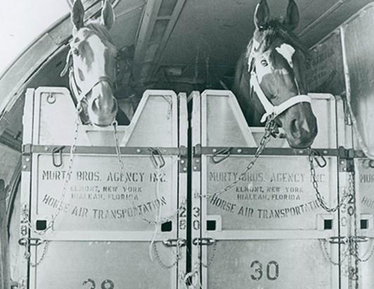 IRT - International transport of horses